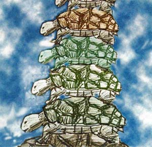5_08_turtles