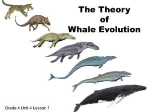 Grade 4 Unit 4 Lesson 1 Whale Evolution-1